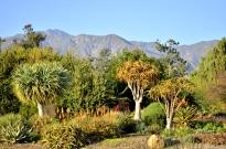 Three Views at the Arboretum (3)