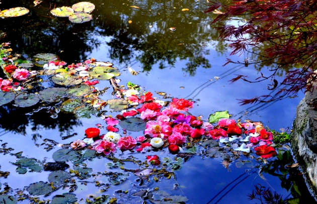 Camellias and Reflection