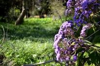 It's Nearly Springtime, part 1 (4)