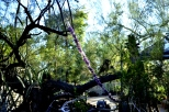 Moorten Botanical Garden, part 4 (8)