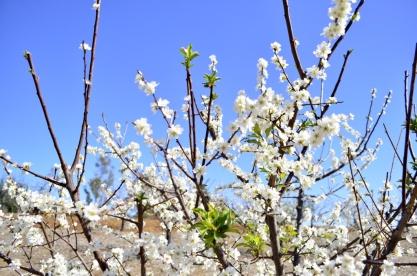 Spring is Sprung (6)