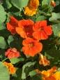 Weekly Photo Challenge, Orange (4)