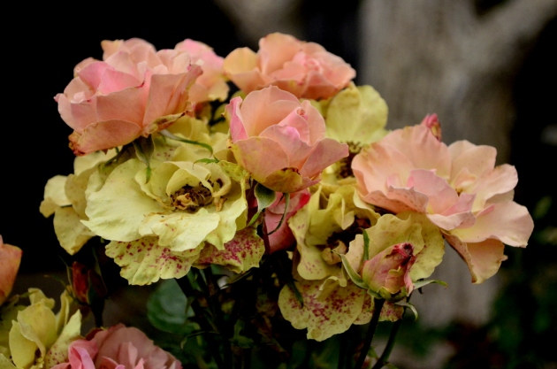 Pale Yellow and Pink Roses