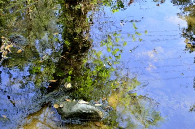 Oak Canyon Pond Reflection