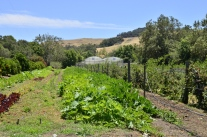 Garden at Linn Ranch