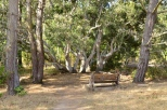 Rest stop in the woods at Fiscalini Ranch Preserve