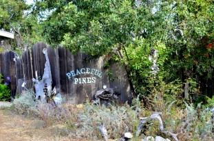 Near Fiscalini Ranch Preserve