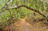 The path continues through the Fiscalini Ranch Preserve woods