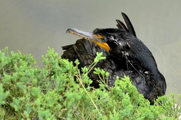 Beautiful Black Bird