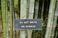 Guard of Huntington's Bamboo (2)