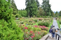 Portland Rose Garden, part 1 (11)