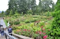 Portland Rose Garden, part 1 (12)