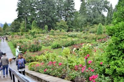 Portland Rose Garden Part 1 Suebee And Kat