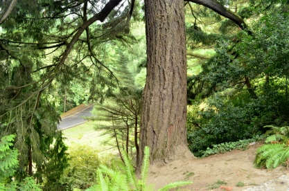 Portland Rose Garden, part 1 (2)