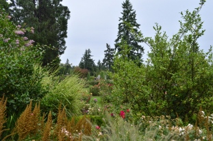 Portland Rose Garden, part 1 (6)