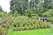 Portland Rose Garden, part 2 (10)