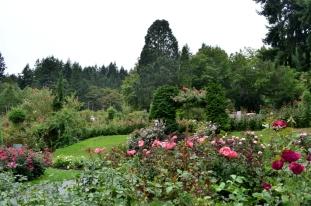Portland Rose Garden, part 2 (11)
