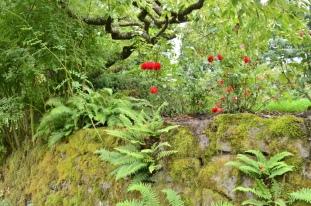 Portland Rose Garden, part 2 (12)