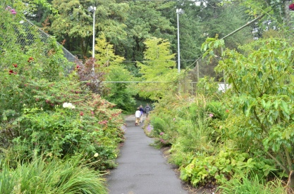 Portland Rose Garden, part 2 (2)