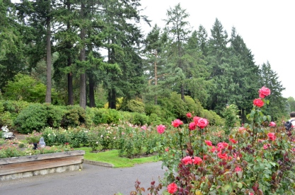 Portland Rose Garden, part 2 (5)