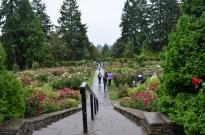 Portland Rose Garden, part 2 (7)