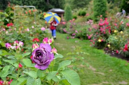 Portland Rose Garden, part 2 (8)