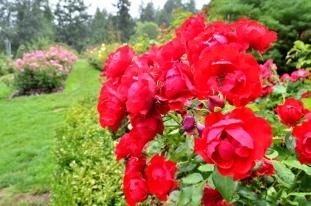 Portland Rose Garden, part 3 (13)