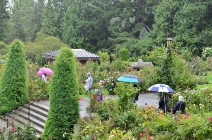 Portland Rose Garden, part 3 (4)