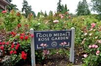 Portland Rose Garden, part 3 (5)
