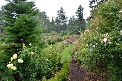 Portland Rose Garden, part 3 (6)