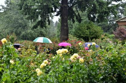 Portland Rose Garden, part 3 (8)