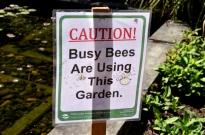 Yes, bees!