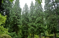 Portland's Japanese Garden, part 1 (7)