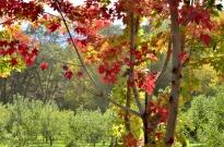 An Autumn Day in Oak Glen (3)