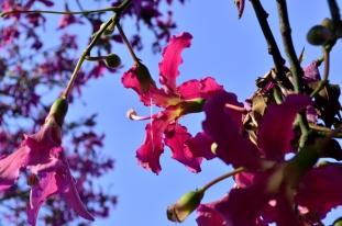Brief Visit to the Garden (11)