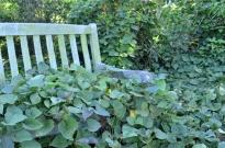 Brief Visit to the Garden (7)