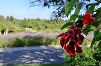 Brief Visit to the Garden (8)