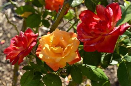 Brief Visit to the Garden (9)