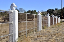 Temecula's Horses (2)
