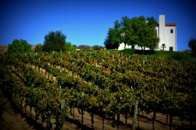 Vines in Temecula