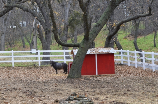 Small horse, small red barn
