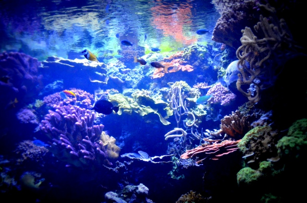 Colors Under Water