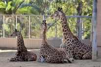 It's All Happening at the Zoo (16)