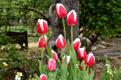 Descanso Gardens in March, part 1 (1)