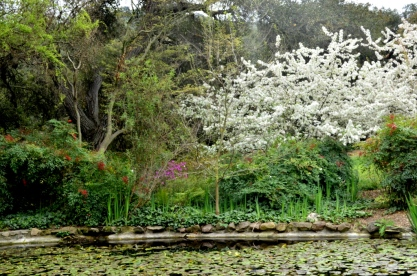 Descanso Gardens in March, part 1 (2)