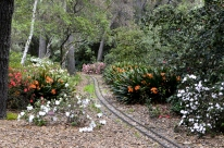 Descanso Gardens in March, part 1 (8)
