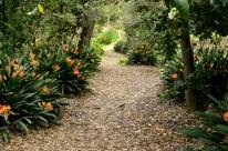 Descanso Gardens in March, part 1 (9)