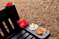 Descanso's Camellias (6)