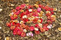 Descanso's Camellias (8)