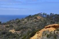 exploring-torrey-pines-state-park-13